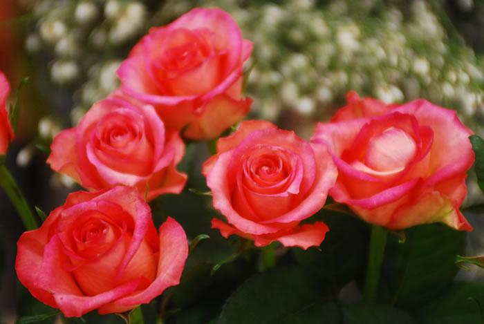 Fiore recisi